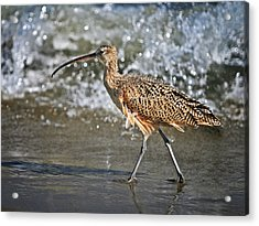 Acrylic Print featuring the photograph Curlew And Tides by William Lee