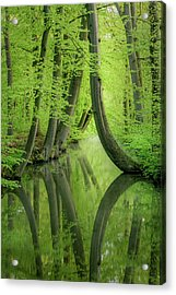 Curved Trees Acrylic Print