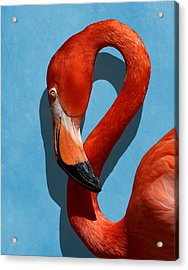Curves, A Head - A Flamingo Portrait Acrylic Print