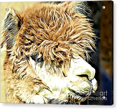 Soft And Shaggy Acrylic Print