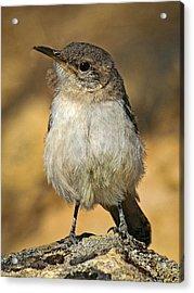 Cute Baby Bird By Jean Noren Acrylic Print by Jean Noren