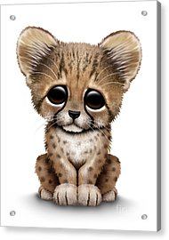 Cute Baby Cheetah Cub Acrylic Print by Jeff Bartels