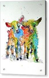 Cute Baby Goats Acrylic Print by Kovacs Anna Brigitta