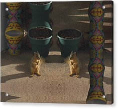 Cute Baby Squirrels On The Porch Acrylic Print