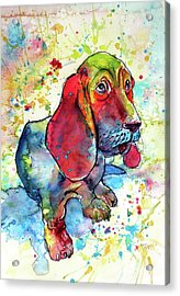 Acrylic Print featuring the painting Cute Basset Hound by Kovacs Anna Brigitta