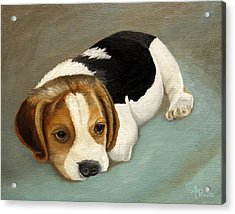 Cute Beagle Acrylic Print