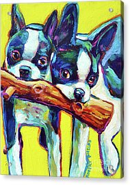 Cute Boston Terriers Acrylic Print by Robert Phelps