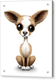Cute Chihuahua Puppy  Acrylic Print by Jeff Bartels