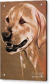 Cute Dog  Acrylic Print