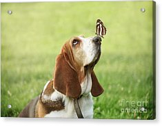 Cute Dog With Butterfly On His Nose Acrylic Print by Jelena Jovanovic