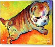Cute English Bulldog Puppy Dog Painting Acrylic Print by Svetlana Novikova