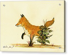 Cute Fox In The Forest Acrylic Print by Juan  Bosco