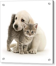 Cute Kitten And Perfect Puppy Acrylic Print