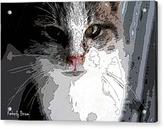 Cute Kittie Acrylic Print