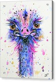 Cute Ostrich Acrylic Print