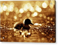 Cute Overload Series - Duckling Reflections Acrylic Print
