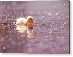 Cute Overload Series - Yellow Duckling Acrylic Print
