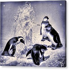 Cute Penguins Acrylic Print by Pennie  McCracken