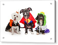 Cute Puppy Dogs Wearing Halloween Costumes Acrylic Print by Susan Schmitz