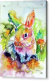 Acrylic Print featuring the painting Cute Rabbit by Kovacs Anna Brigitta