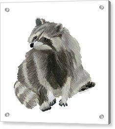 Cute Raccoon Acrylic Print