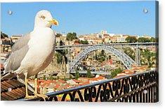 Cute Seagull And Porto's Cityscape Acrylic Print