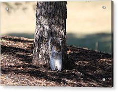 Acrylic Print featuring the photograph Cute Squirrel by Vadim Levin