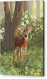 Cute Whitetail Fawn Acrylic Print