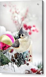 Cute Winter Bird - Tufted Titmouse Acrylic Print by Christina Rollo