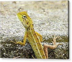 Cute Yellow Lizard Acrylic Print
