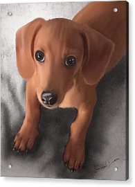 Cutest Pup Ever Acrylic Print by Sannel Larson