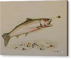 Cutthroat Trout Acrylic Print by Jeff Harrell