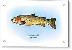 Cutthroat Trout Acrylic Print by Ralph Martens