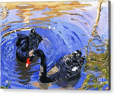 Cygnus Atratus Acrylic Print by Lynne Reichhart