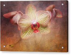 Cymbidium Orchid Acrylic Print by Tom Mc Nemar