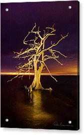 Cypress At Sunset 2860 Acrylic Print by Dan Beauvais