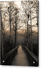 Acrylic Print featuring the photograph Cypress Boardwalk by Gary Dean Mercer Clark