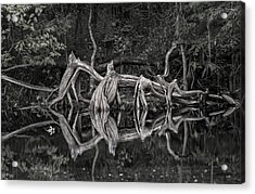Acrylic Print featuring the photograph Cypress Design by Steven Sparks