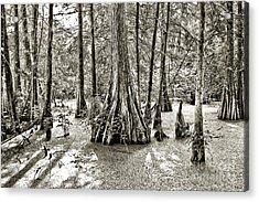 Cypress Evening Acrylic Print by Scott Pellegrin