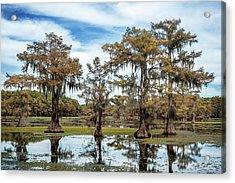 Cypress Expression  Acrylic Print