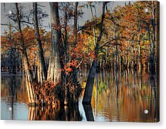 Cypress Group  Acrylic Print