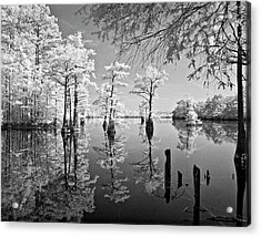 Cypress In Walkers Mill Pond Acrylic Print