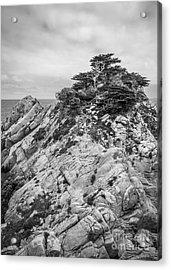 Cypress Island Acrylic Print by Alexander Kunz