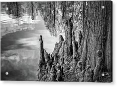 Acrylic Print featuring the photograph Cypress Knees In Bw by James Barber