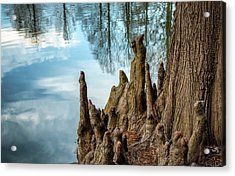 Acrylic Print featuring the photograph Cypress Knees by James Barber