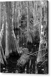 Cypress Pond Acrylic Print by Juergen Roth