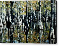 Cypress Reflections Acrylic Print