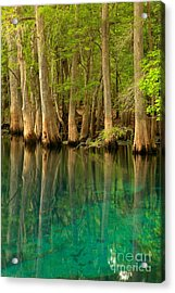 Cypress Reflections In Blue Acrylic Print by Adam Jewell