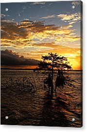 Cypress Sunset Acrylic Print by Judy Vincent
