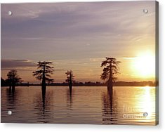 Cypress Sunset Acrylic Print